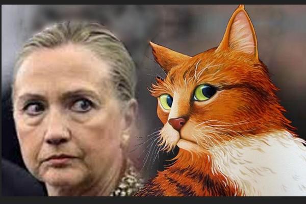 Hillary orange cat