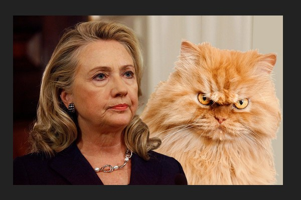 hillary mean cat