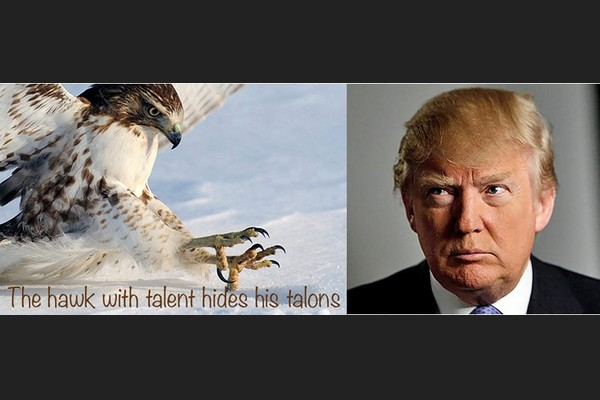 The Hawk with Talent Hides his Talons